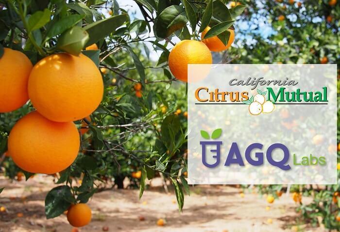 Citrus Showcase 2019 California