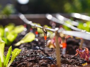 Fertigation: Quality in Agricultural Production