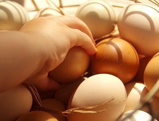 Fipronil in Eggs