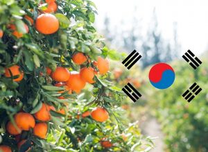 New Korean MRLs to Impact California Citrus Industry