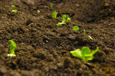 analysis of agricultural soils