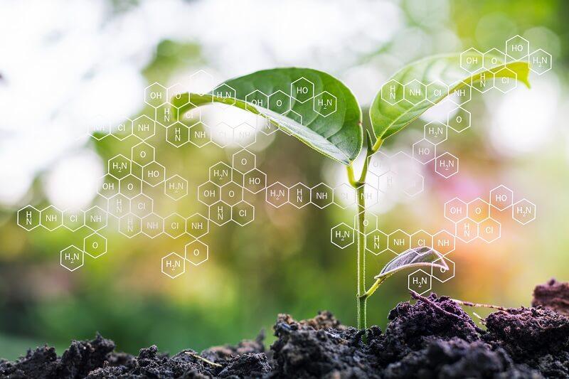 macronutrients in plants