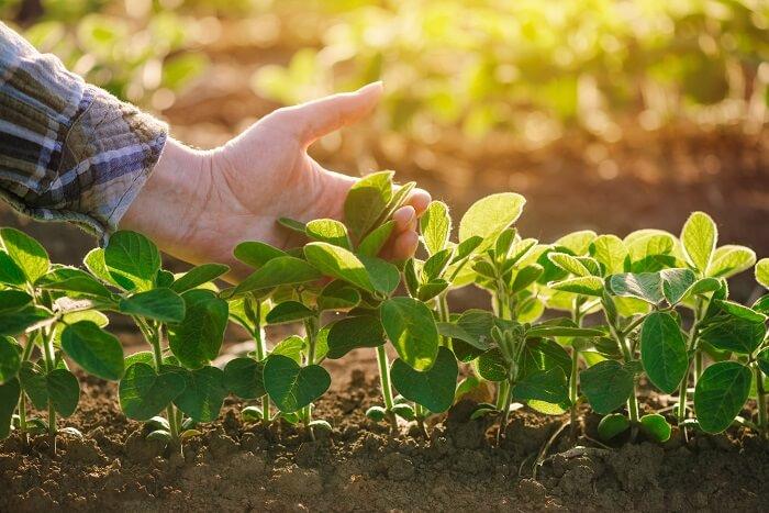 micronutrients in plants